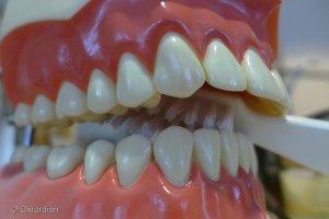 Deantal Care - Brush Your Teeth